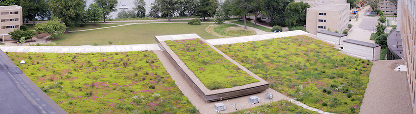 Dejope green roof