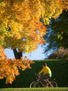 Cyclist in fall