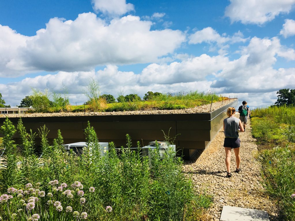 The interns had an exclusive tour of the Dejope Residence Hall green roof.