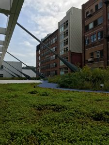 Green roof at the David L. Lawrence Convention Center in Pittsburgh, PA. Photo by Nathan Jandl.