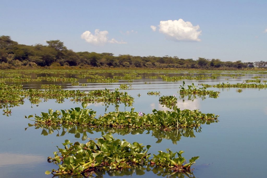 Lake Naivasha, Kenya. Photo courtesy of Flickr user GRID-Arendal, CC BY-NC-SA 2.0.