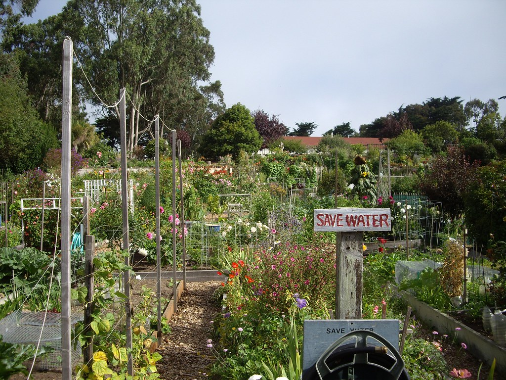 """Fort Mason Community Garden"" by Flickr user greychr, CC BY-SA 2.0."